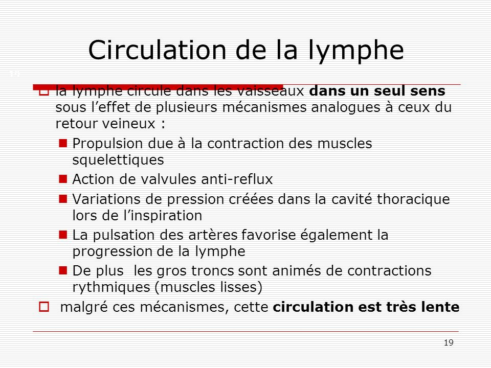 Circulation de la lymphe