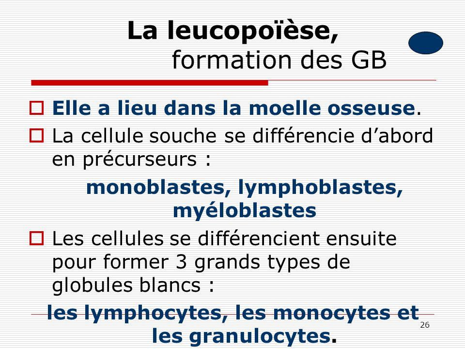 La leucopoïèse, formation des GB