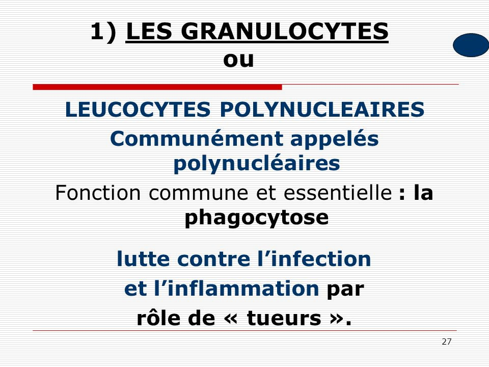 1) LES GRANULOCYTES ou LEUCOCYTES POLYNUCLEAIRES