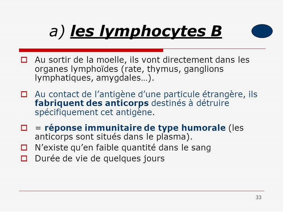 a) les lymphocytes B Au sortir de la moelle, ils vont directement dans les organes lymphoïdes (rate, thymus, ganglions lymphatiques, amygdales…).