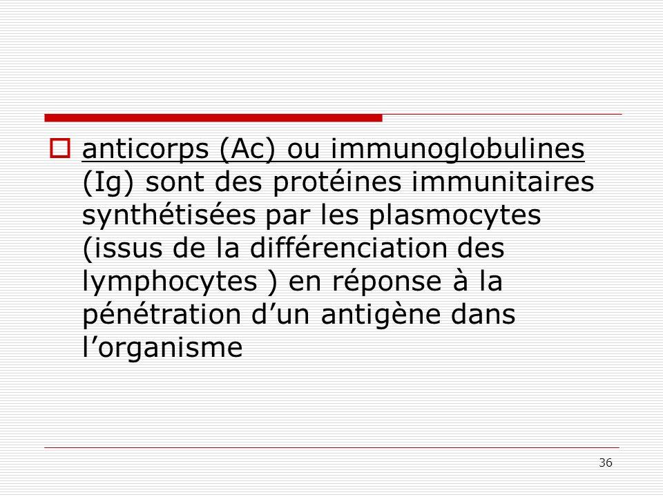 anticorps (Ac) ou immunoglobulines (Ig) sont des protéines immunitaires synthétisées par les plasmocytes (issus de la différenciation des lymphocytes ) en réponse à la pénétration d'un antigène dans l'organisme