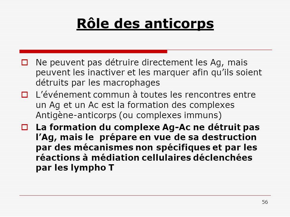 Rôle des anticorps