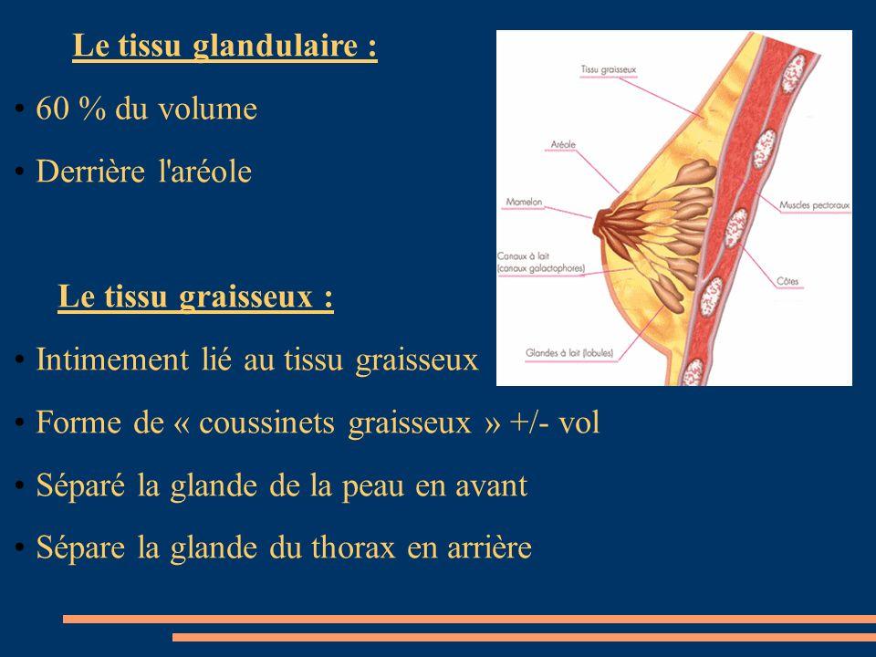 Le tissu glandulaire : 60 % du volume. Derrière l aréole. Le tissu graisseux : Intimement lié au tissu graisseux.
