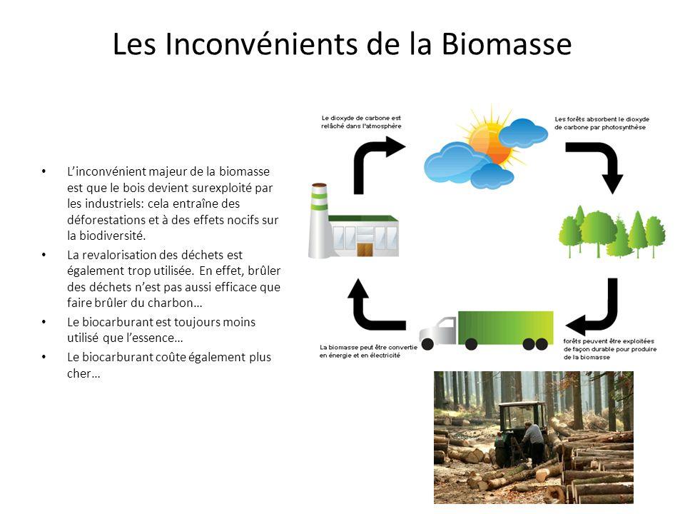 Les Inconvénients de la Biomasse