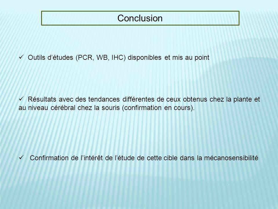 Conclusion Outils d'études (PCR, WB, IHC) disponibles et mis au point