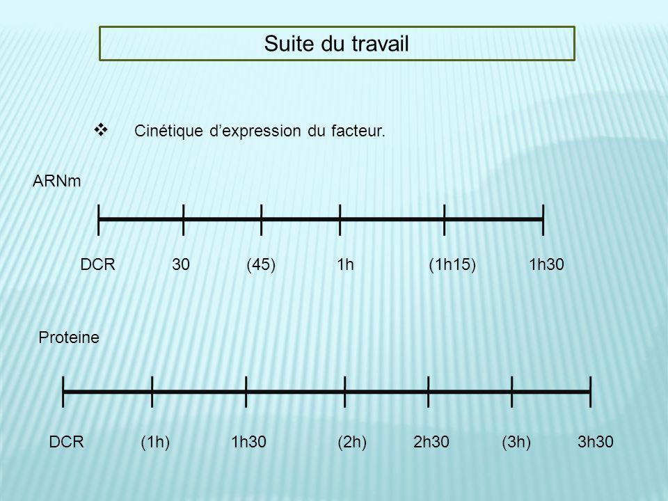 Suite du travail Cinétique d'expression du facteur. ARNm