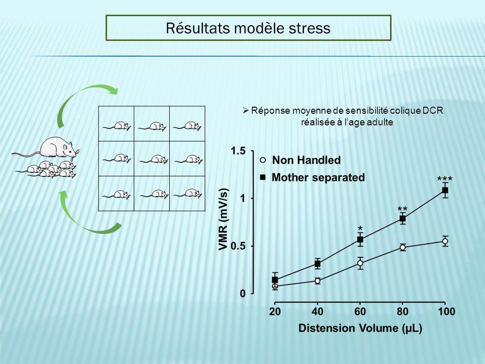 Résultats modèle stress