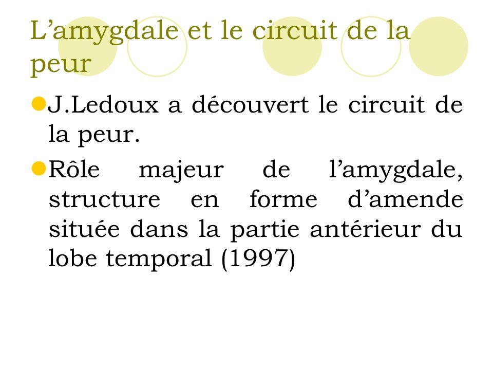 L'amygdale et le circuit de la peur