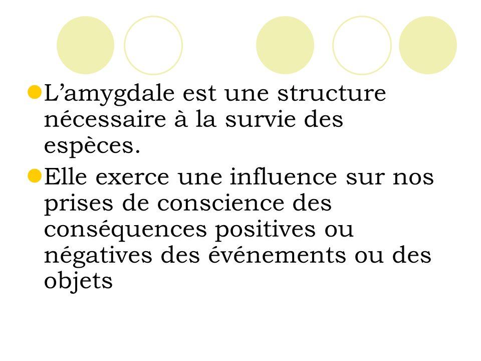 L'amygdale est une structure nécessaire à la survie des espèces.