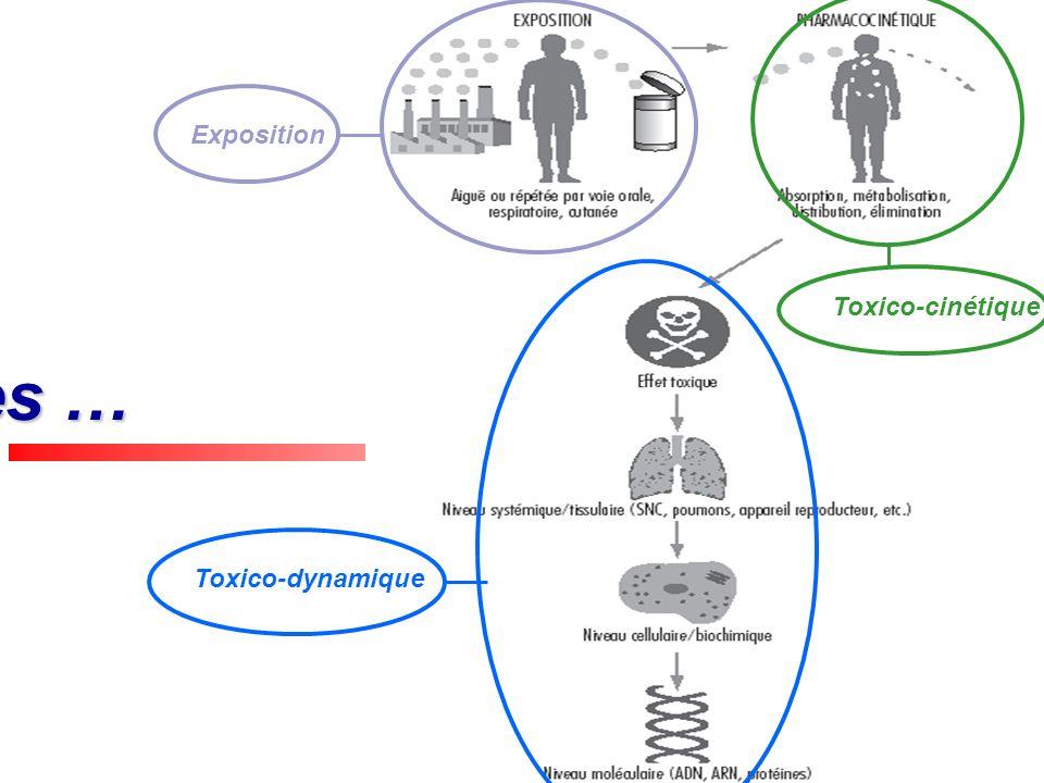 Exposition Toxico-cinétique Étapes … Toxico-dynamique
