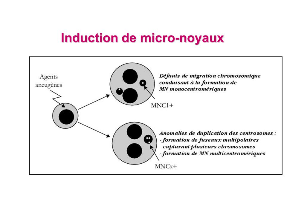 Induction de micro-noyaux
