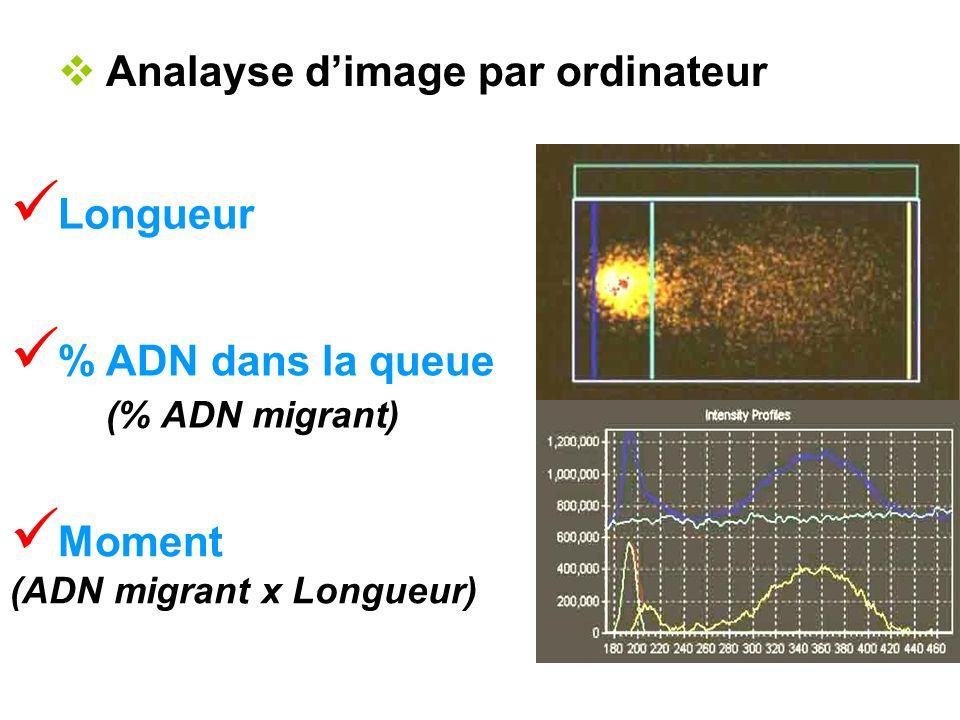 Analayse d'image par ordinateur