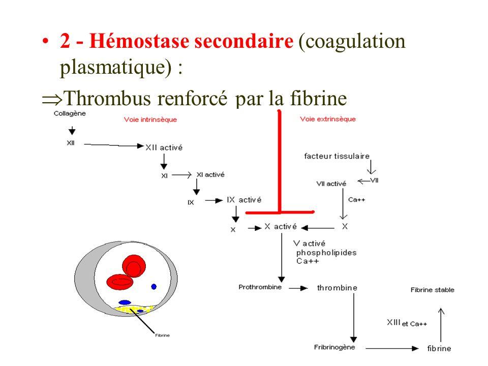 2 - Hémostase secondaire (coagulation plasmatique) :