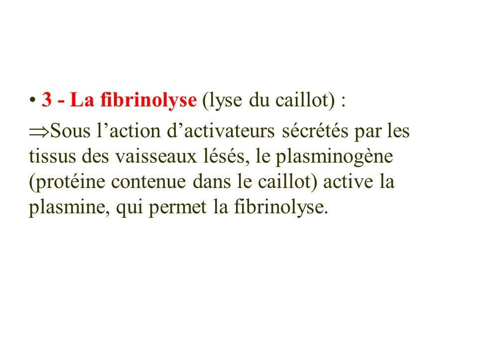 3 - La fibrinolyse (lyse du caillot) :