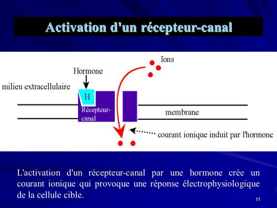 Activation d un récepteur-canal