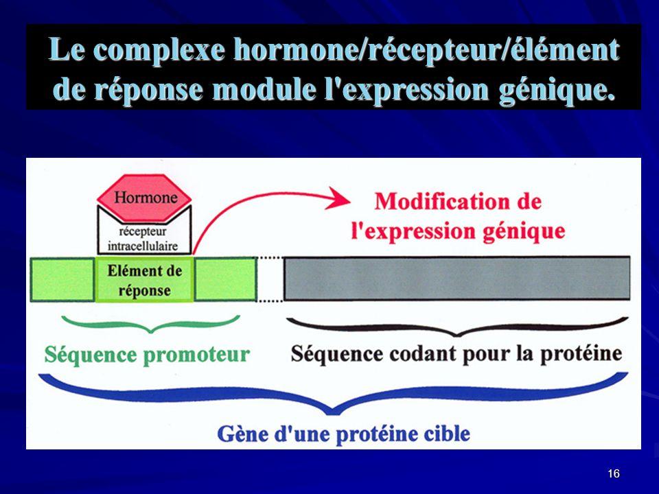 Le complexe hormone/récepteur/élément de réponse module l expression génique.