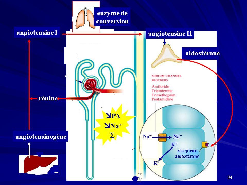PA Na+  enzyme de conversion angiotensine I angiotensine II rénine