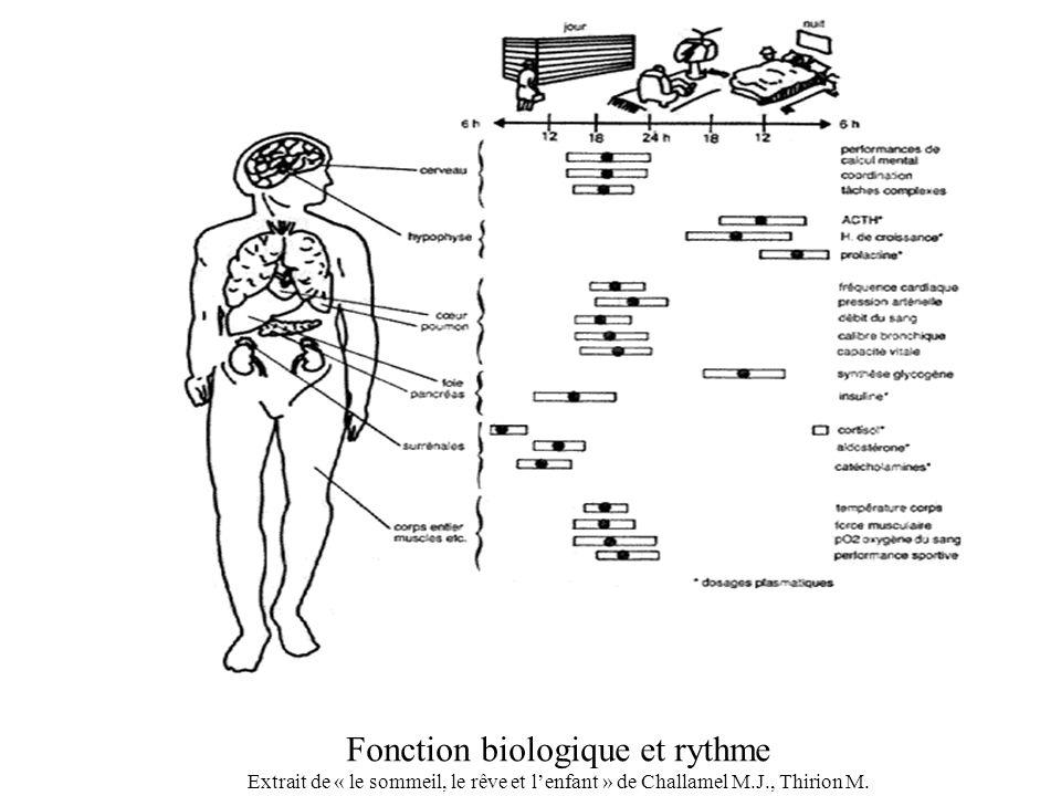 Fonction biologique et rythme