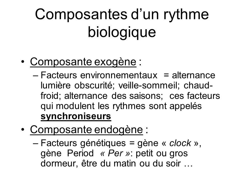Composantes d'un rythme biologique