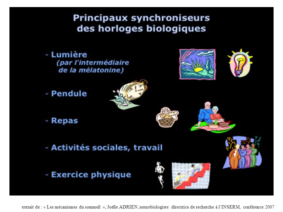 extrait de : « Les mécanismes du sommeil », Joëlle ADRIEN, neurobiologiste directrice de recherche à l'INSERM, conférence 2007