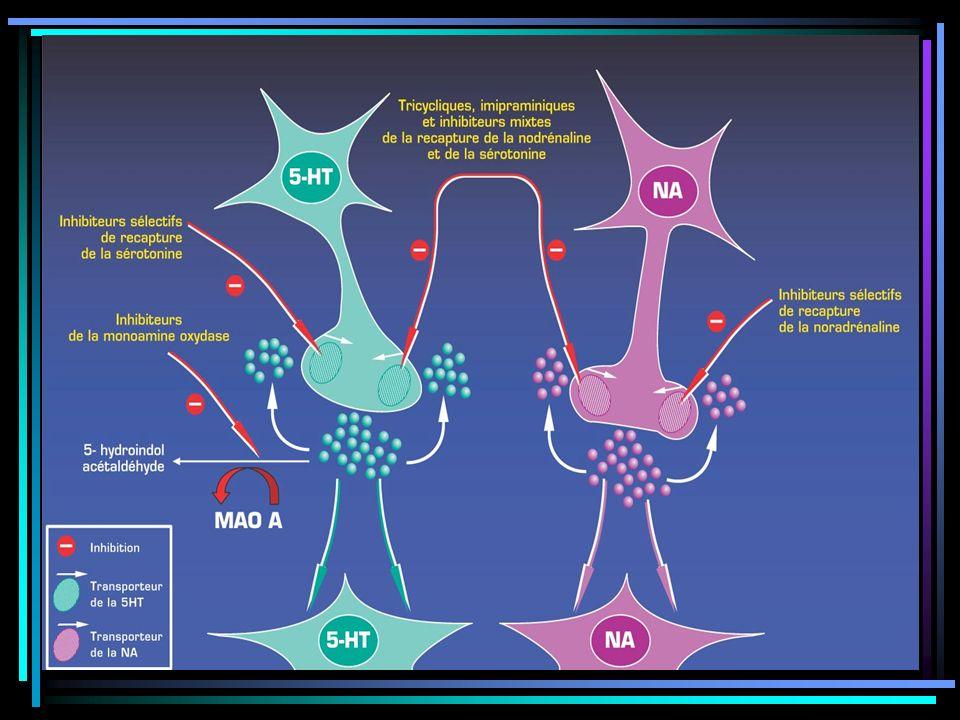 Inhibition de la recapture des monoamines et l'augmentation de leur biodisponibilité au niveau du site récepteur entraînant une élévation de la concentration en Nadr et sérotonine dans la fente synaptique