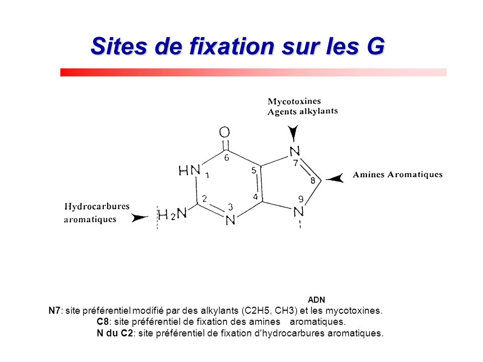 Sites de fixation sur les G