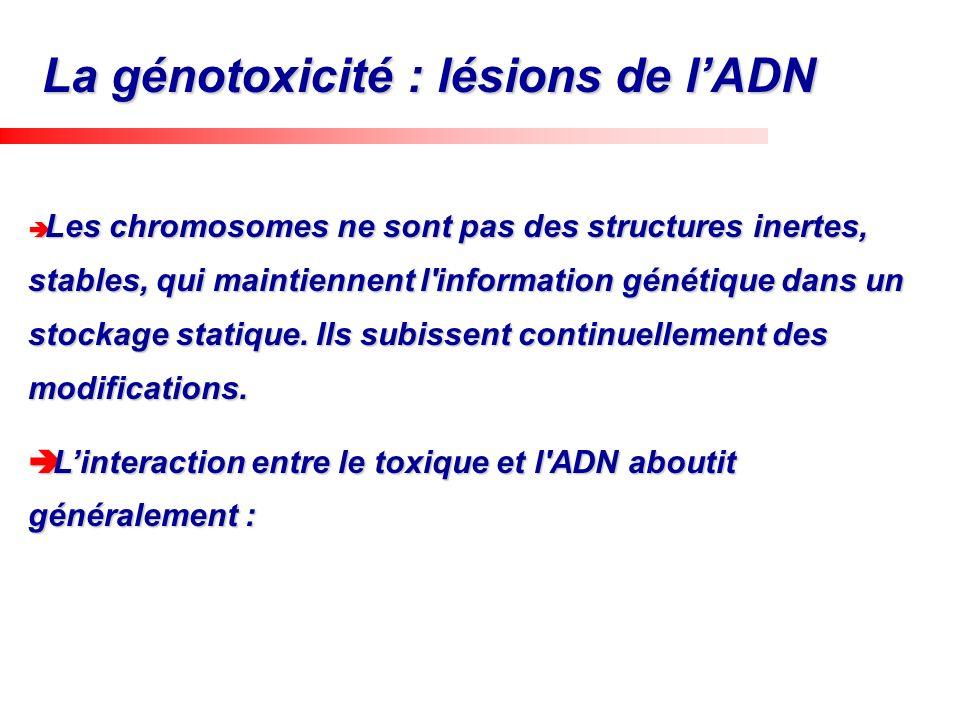 La génotoxicité : lésions de l'ADN