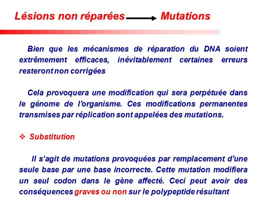 Lésions non réparées Mutations