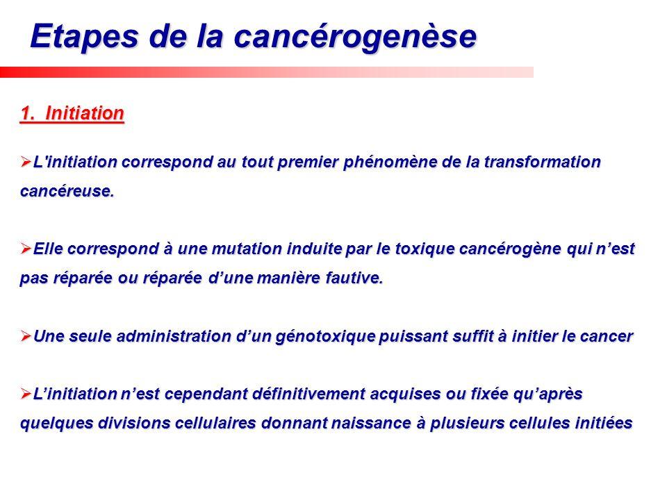 Etapes de la cancérogenèse
