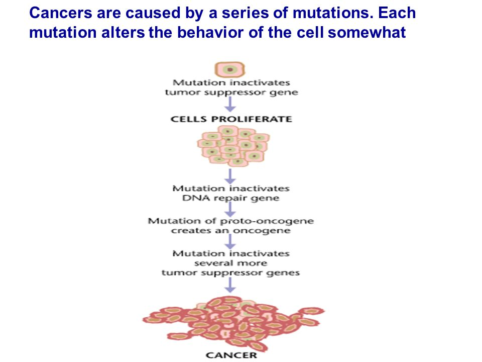 Cancers are caused by a series of mutations