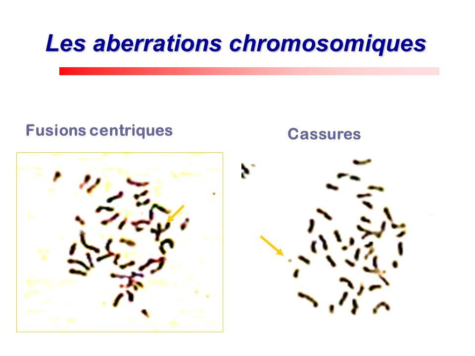 Les aberrations chromosomiques