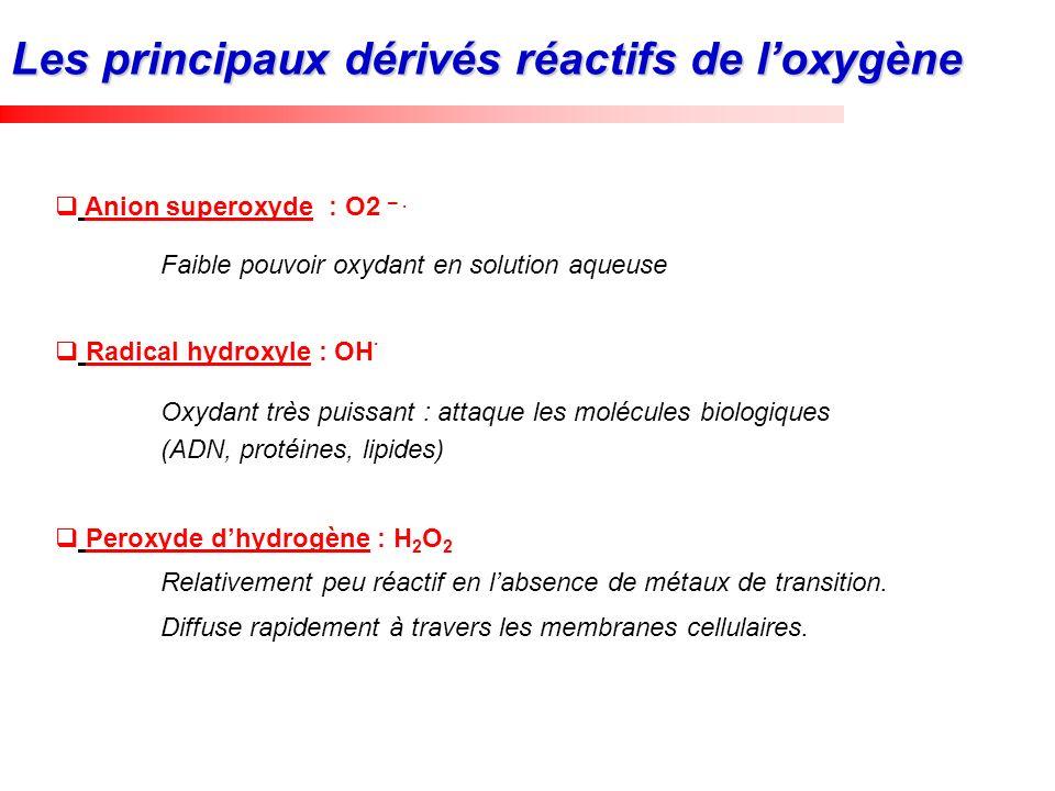 Les principaux dérivés réactifs de l'oxygène