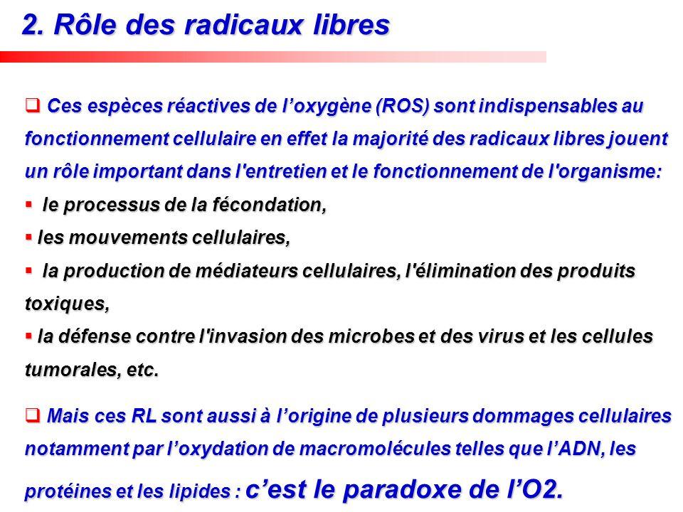 2. Rôle des radicaux libres