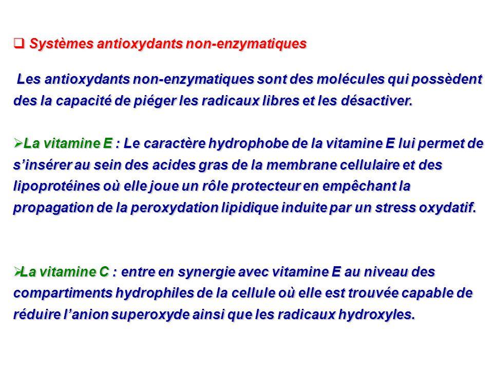 Systèmes antioxydants non-enzymatiques