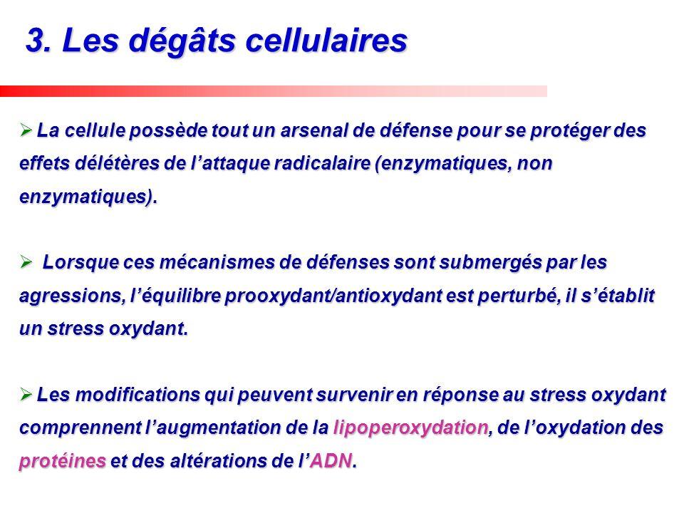 3. Les dégâts cellulaires