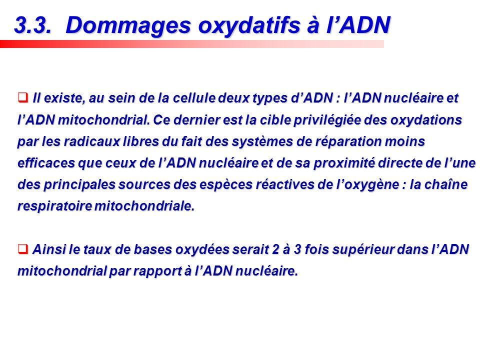 3.3. Dommages oxydatifs à l'ADN