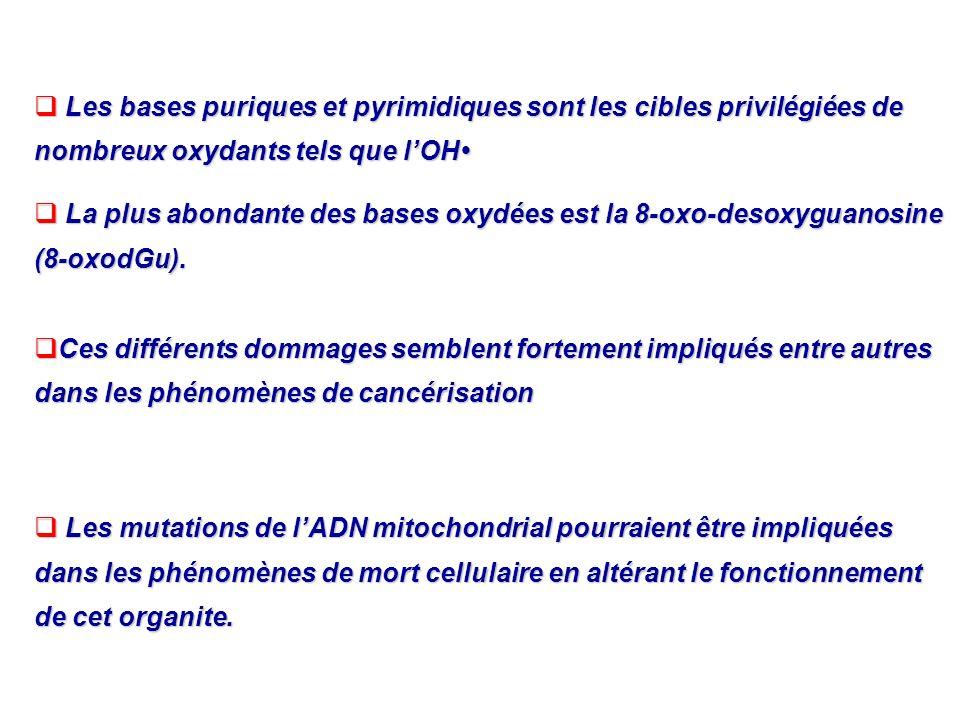 Les bases puriques et pyrimidiques sont les cibles privilégiées de nombreux oxydants tels que l'OH•