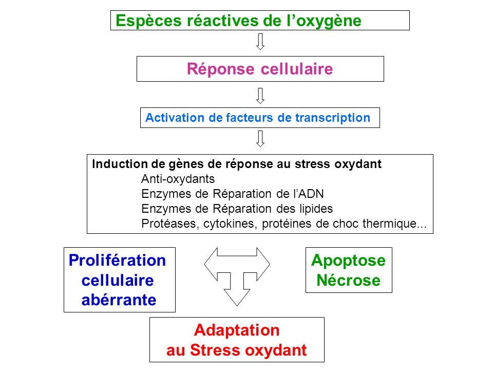 Espèces réactives de l'oxygène