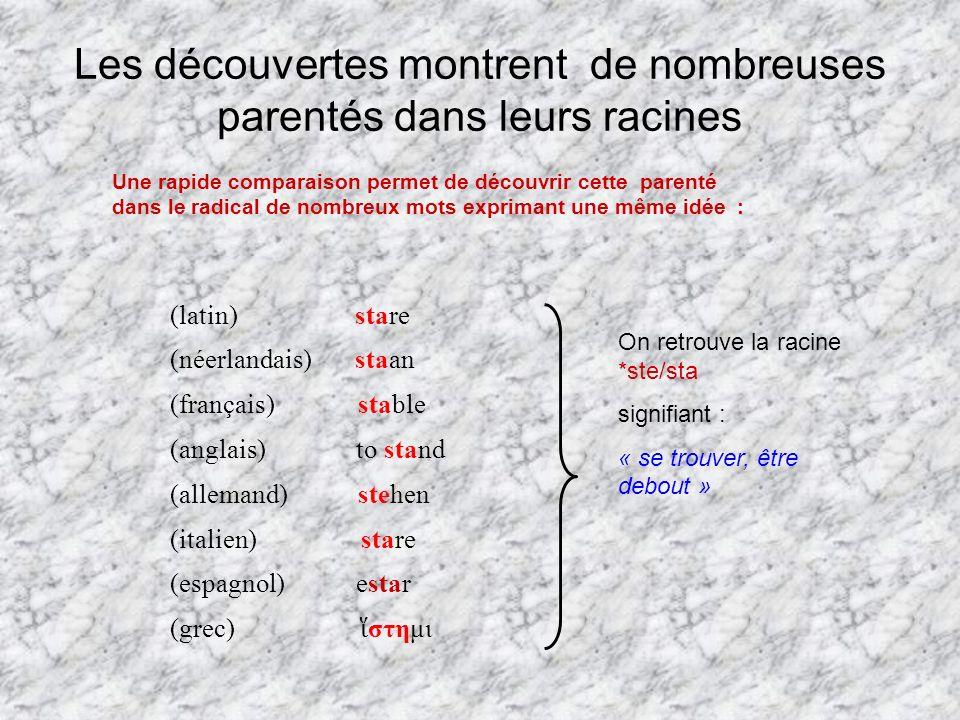 Les découvertes montrent de nombreuses parentés dans leurs racines