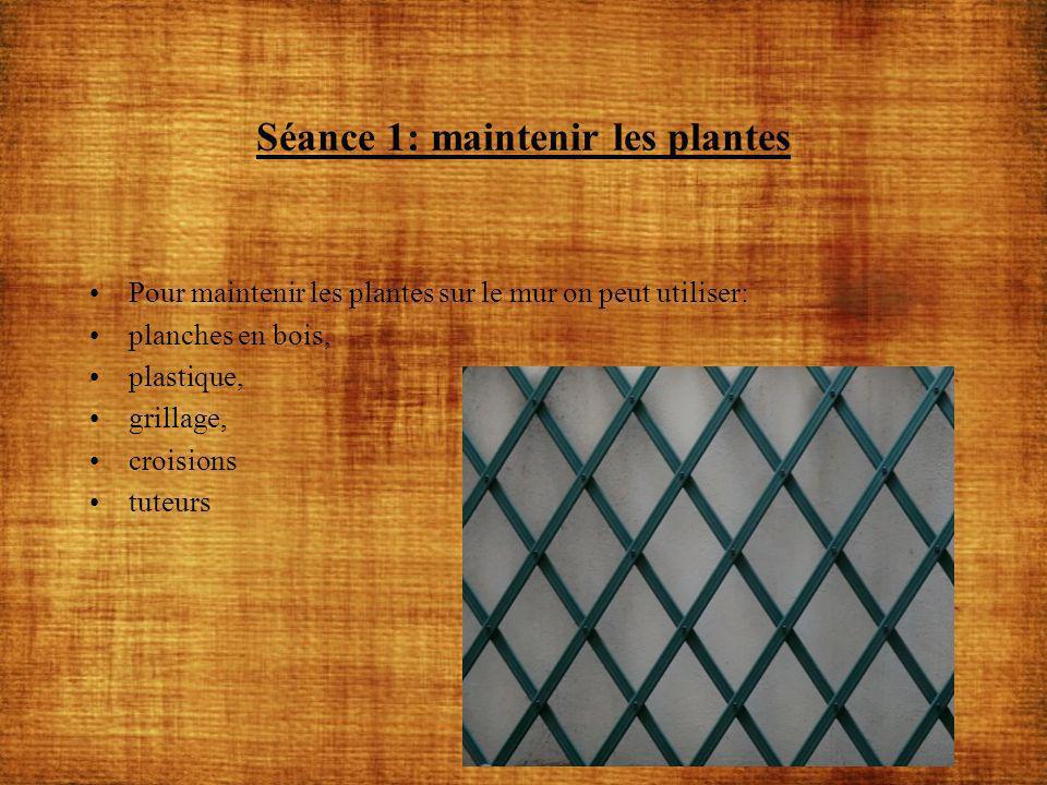 Séance 1: maintenir les plantes