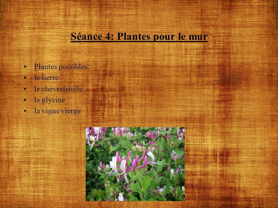 Séance 4: Plantes pour le mur