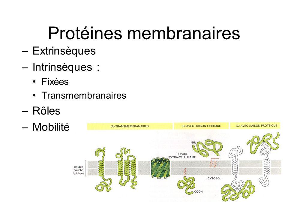 Protéines membranaires