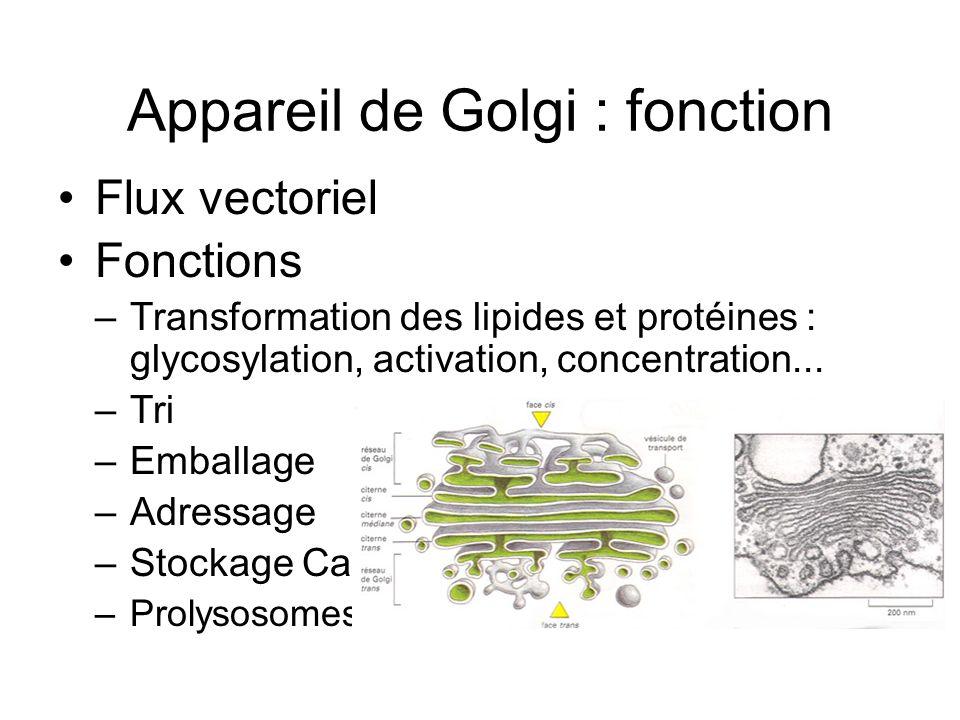 Appareil de Golgi : fonction