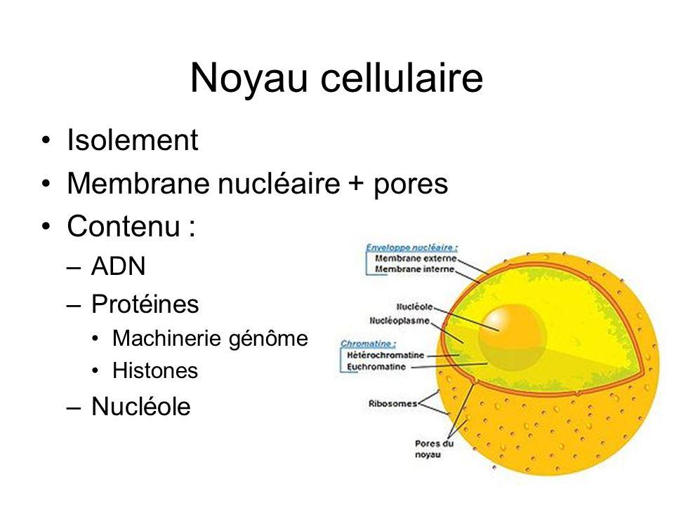 Noyau cellulaire Isolement Membrane nucléaire + pores Contenu : ADN