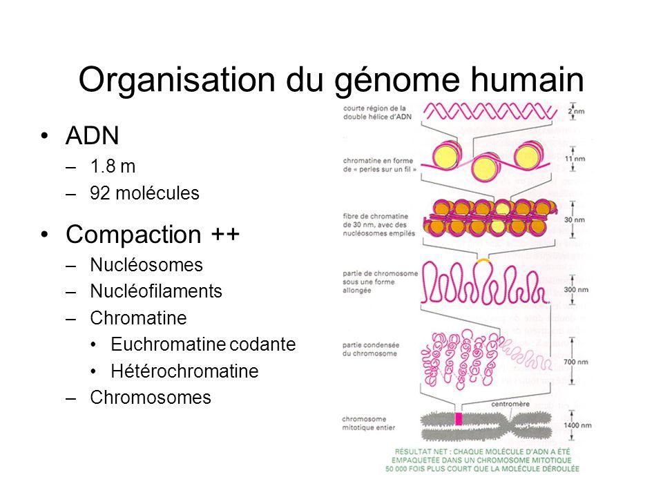 Organisation du génome humain