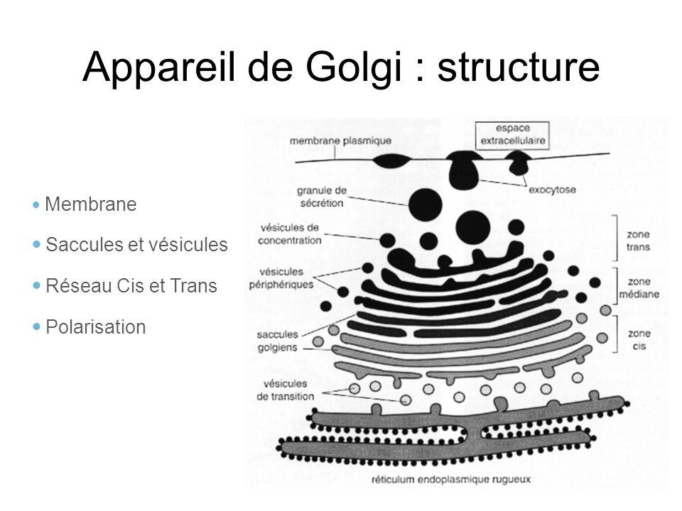 Appareil de Golgi : structure