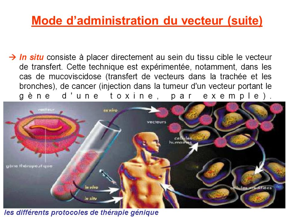 Mode d'administration du vecteur (suite)