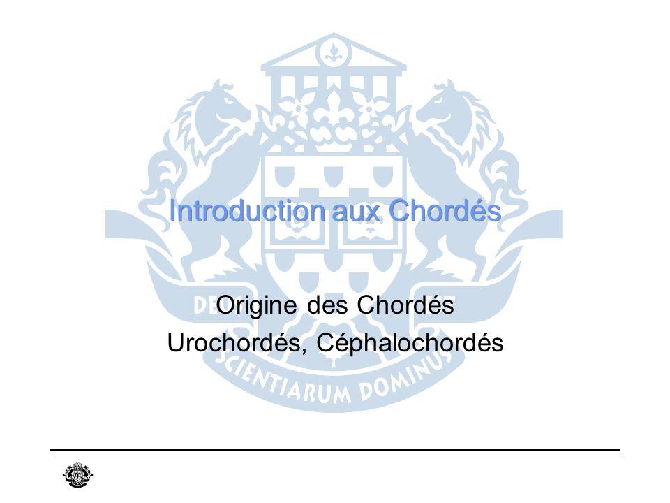 Introduction aux Chordés