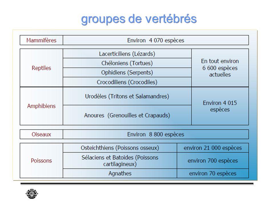 groupes de vertébrés