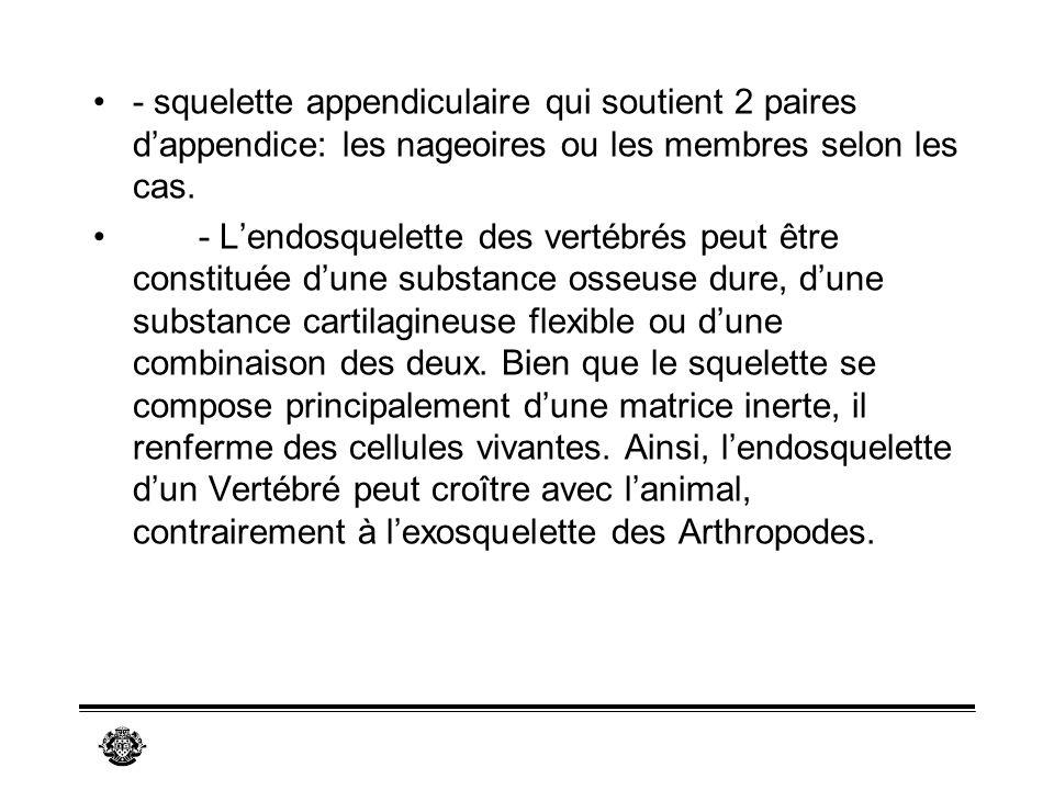 - squelette appendiculaire qui soutient 2 paires d'appendice: les nageoires ou les membres selon les cas.